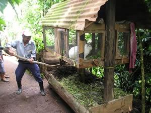 Rabbit-Compost-ChichupacAug05